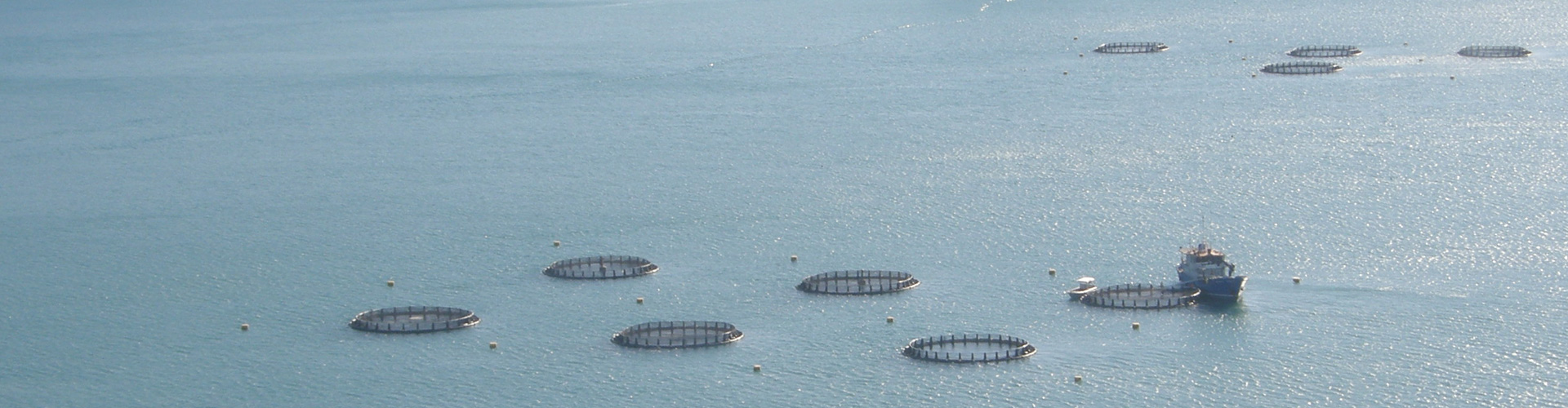 Cone Bay Barramundi Farm